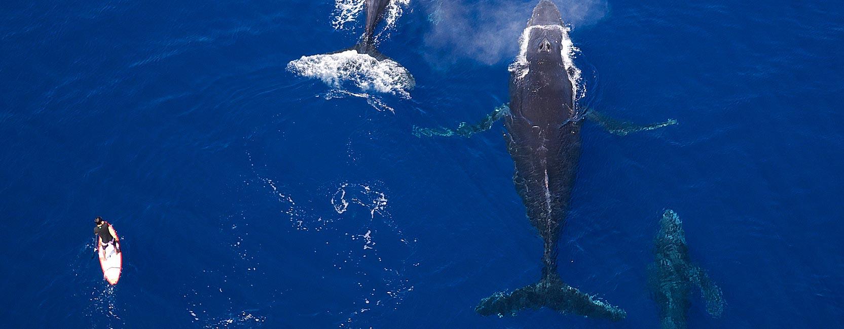 tahitiflyshoot_P1080073_whales-2